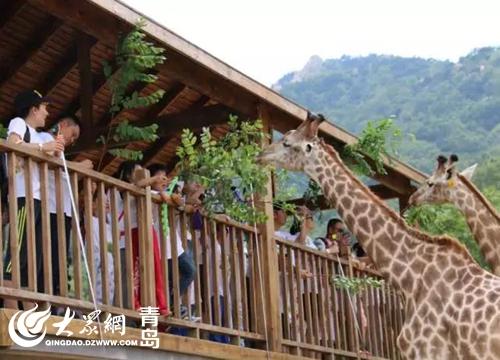"""青岛森林野生动物世界探秘森林奇境·勇闯动物世界""""最野假期""""夏令营"""