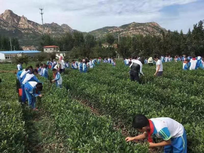 青岛平度政府采购网_青岛二月二农场:《这里是孩子们的乐园》_企业风采_青岛大众网