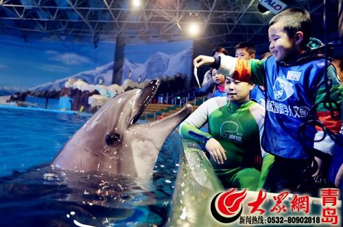 与海豚明星亲密互动